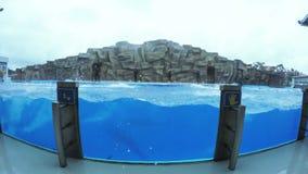 Funcionamiento del delfín en piscina almacen de video