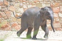 Funcionamiento del elefante del bebé Fotos de archivo libres de regalías