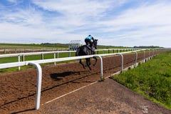 Funcionamiento del entrenamiento del caballo de raza Imagen de archivo libre de regalías