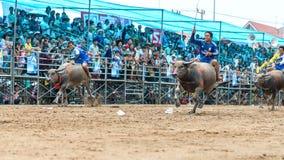 Funcionamiento del festival del búfalo de los participantes que compite con Imagenes de archivo