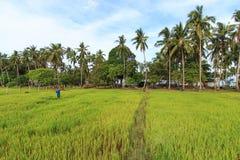 Funcionamiento del granjero de un campo del arroz en Palawan, Filipinas Foto de archivo libre de regalías