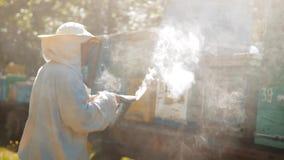 funcionamiento del hombre del apicultor del Abeja-fabricante de un dispositivo del fumador del busca del tubo del humo para recha almacen de metraje de vídeo