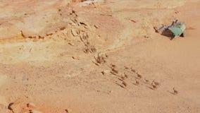 Funcionamiento del paquete del cabra montés de Wadi Rum almacen de metraje de vídeo