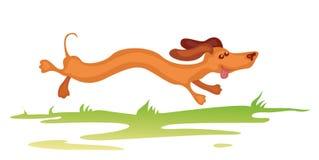 Funcionamiento del perro basset Imagenes de archivo