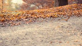 Funcionamiento en el parque en otoño almacen de metraje de vídeo