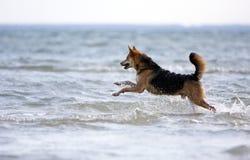 Funcionamiento feliz del perro Fotografía de archivo libre de regalías