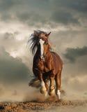 Funcionamiento salvaje del caballo de proyecto del chesnut Fotografía de archivo