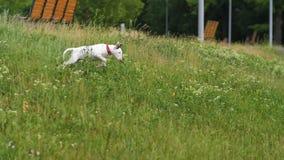 Funcionamiento y salto del perro metrajes