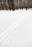 Funcionamientos de esquí al borde del bosque del abedul Fotos de archivo libres de regalías