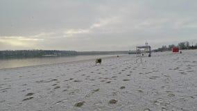 Funcionamientos hermosos del perro a lo largo de la orilla cubierta con nieve en la cámara lenta almacen de metraje de vídeo