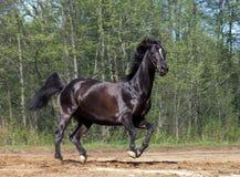Funcionar con el caballo negro fotografía de archivo libre de regalías