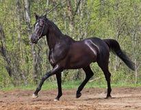 Funcionar con el caballo negro Fotografía de archivo