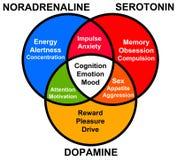 Funciones de la hormona Foto de archivo