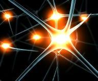 Funciones de la sinapsis de las neuronas del cerebro Fotos de archivo libres de regalías
