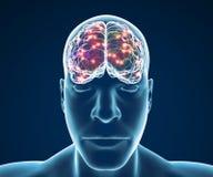 Funciones de la sinapsis de las neuronas del cerebro Imagen de archivo
