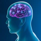 Funciones de la sinapsis de las neuronas del cerebro Fotos de archivo