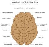 Funciones del cerebro Fotos de archivo