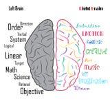Funciones izquierda-derecha del cerebro humano ilustración del vector