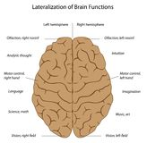 Functions of the brain. Differences in functions of the two hemispheres, eps8 Stock Photos
