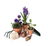 Fundamentos de jardinagem com plantas e ferramentas Foto de Stock Royalty Free
