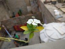 Fundamentos de la naturaleza de la flor Fotografía de archivo