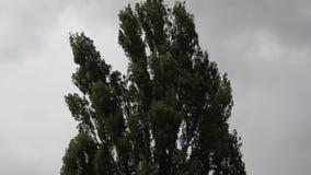 Funde o vento e move árvores filme