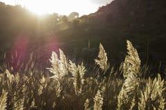 Fundem as últimas partes de outono Foto de Stock