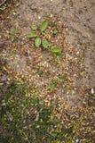 Fundo à terra da textura da grama da areia Imagens de Stock