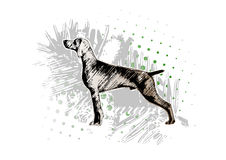 Fundo 2 do cão Imagem de Stock