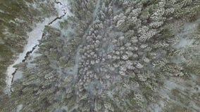 Fundo aéreo Elevação acima das árvores cobertos de neve do inverno na floresta fria da montanha vídeos de arquivo
