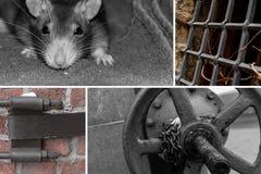 Fundo abandonado fábrica do grunge da grade do porão da válvula da produção do rato construção abandonada base fotos de stock