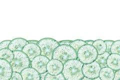 Fundo abstrato com citrinas de fatias do cal Fotografia de Stock Royalty Free