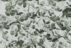 Fundo abstrato com folha do trevo Foto de Stock