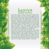 Fundo abstrato com folha verde Imagem de Stock