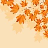 Fundo abstrato com folhas. Imagens de Stock Royalty Free