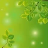 Fundo abstrato com folhas verdes. Fotos de Stock