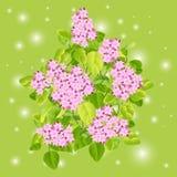 Fundo abstrato com folhas verdes. Foto de Stock Royalty Free