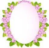 Fundo abstrato com folhas verdes. Imagem de Stock Royalty Free