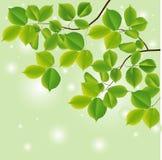 Fundo abstrato com folhas verdes. Imagem de Stock