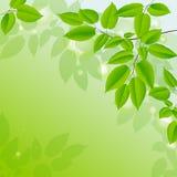Fundo abstrato com folhas verdes. Imagens de Stock