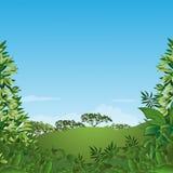 Fundo abstrato com folhas verdes. Fotos de Stock Royalty Free