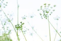Fundo abstrato com grama verde ilustração stock