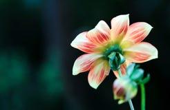 Fundo abstrato com uma flor Imagens de Stock