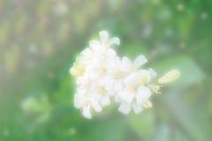 Fundo abstrato da flor branca foto de stock royalty free