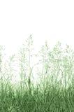 Fundo abstrato da grama de prado, grande espaço vertical macro isolado detalhado da cópia do close up fotografia de stock