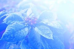Fundo abstrato da luz suave da flor Foto de Stock Royalty Free