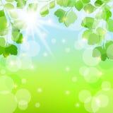 Fundo abstrato da mola com folhas Imagens de Stock Royalty Free