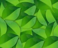 Fundo abstrato da mola com folhas verdes Ilustração Royalty Free