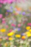 Fundo abstrato da natureza do verão - fotos conservadas em estoque Fotos de Stock