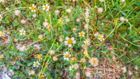Fundo abstrato das flores brancas Imagens de Stock Royalty Free
